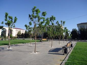 Скамейки и молодые деревца