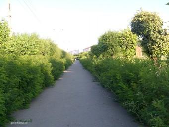 Тротуар по ул. Сулейменова