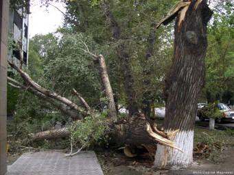 Сломанное дерево после урагана 11-12 октября